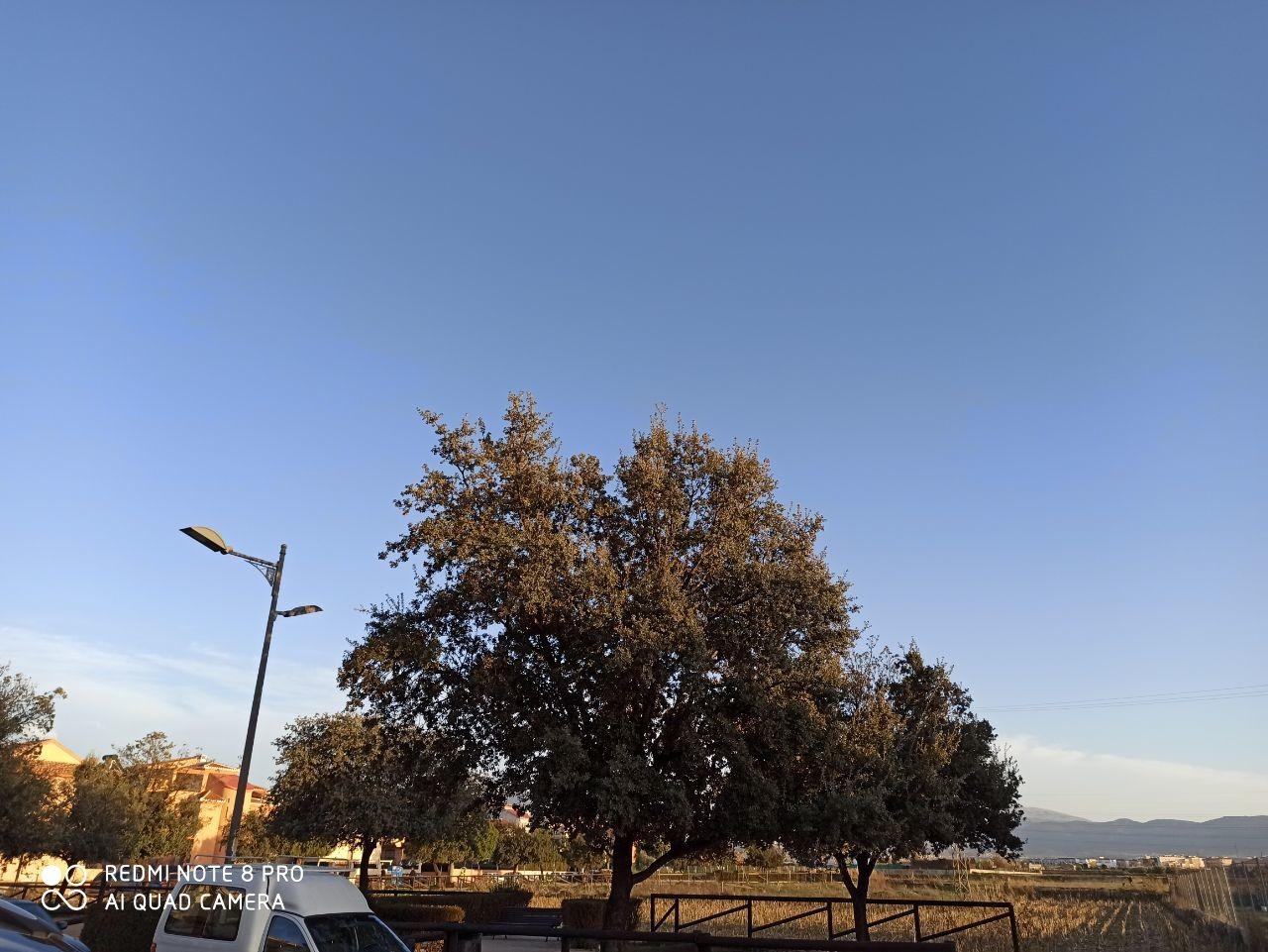 Foto de Galería de fotos tomadas con el Redmi Note 8 Pro (1/27)