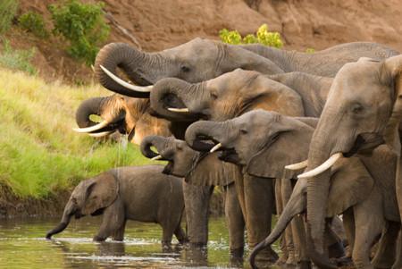 Google quiere acabar con la caza de elefantes en África