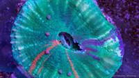 Un asombroso timelapse de la vida acuática creado por Sandro Bocci