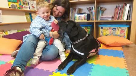 Abril, una labrador retriever, nos descubre cómo la pedagogía terapéutica con perros ayuda a niños y mayores