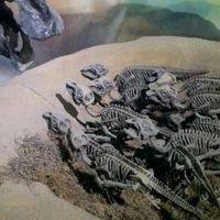 Los dinosaurios también han ido al espacio: éste fue el primer fósil que lo consiguió