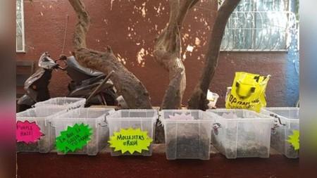 """En Ciudad de México encontraron una """"tiendita"""" que vendía marihuana de sabores"""