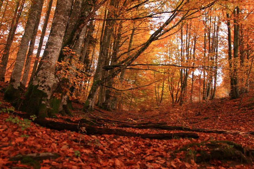 Citas para fotografiar el otoño: la Selva de Irati en Navarra