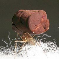 Podemos aligerar metales pesados hasta el punto de que sean transportados por un simple mosquito