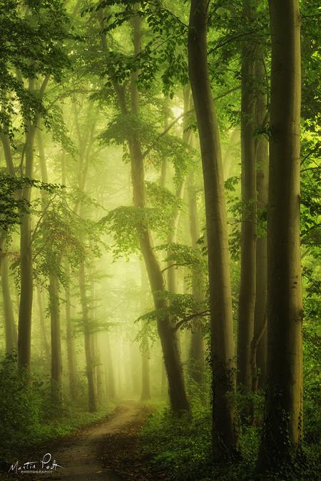 Martin Podt Forest 6
