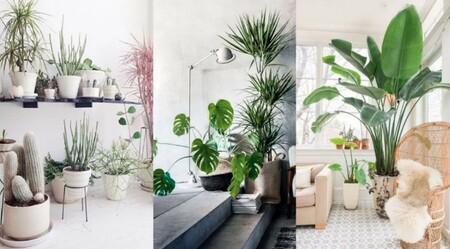 Plantas Interior Purificar Aire Eliminar Humedad Moho Casa