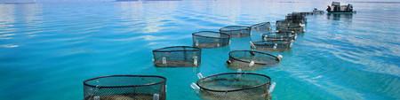 Acuicultura Offshore Tropos Plocan