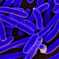"""Estos científicos le han hecho un """"trasplante metabólico"""" a una bacteria para convertirla en un arma contra el cambio climático"""