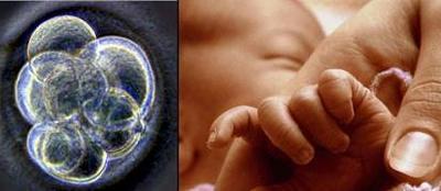 El tripartito del ADN para evitar las enfermedades mitocondriales