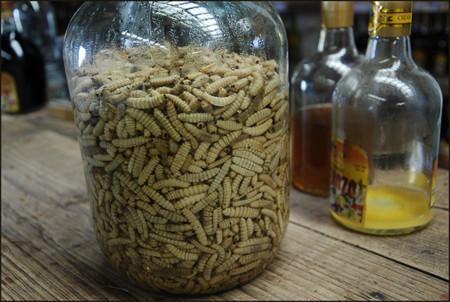 Larva para el mezcal con gusano