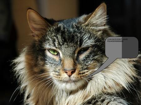 Los gatos reconocen la voz de sus dueños, pero optan por ignorarla