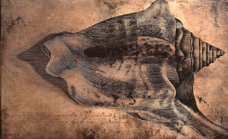 Las dos primeras mujeres que dibujaron lo que veían por el microscopio revolucionaron la ilustración científica para siempre