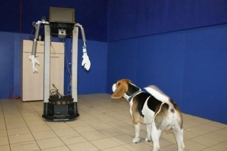 [Vídeo] Robot y perro
