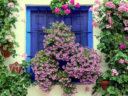 Visita gratis a los patios de c rdoba - Imagenes de patios andaluces ...