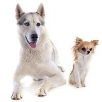 El origen de los perros americanos
