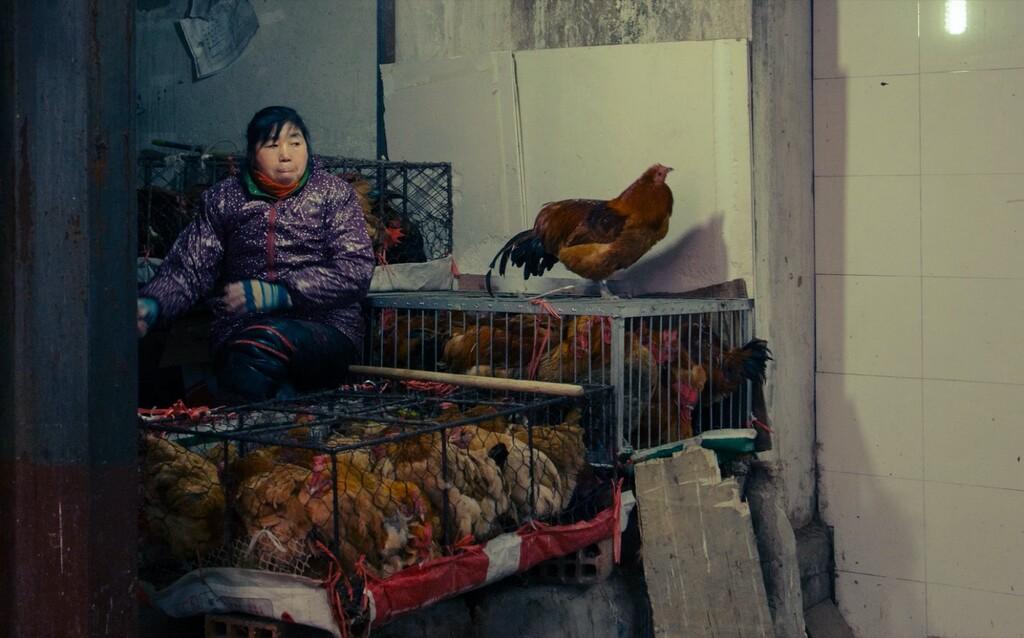 China detecta el primer caso confirmado de la gripe aviar H10N3 en humanos: una cepa poco preocupante, pero un problema cada vez mayor