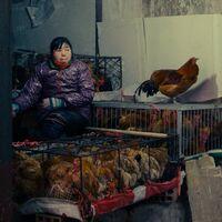 China detecta el primer caso confirmado de la gripe aviar H10N3 en humanos: un caso controlado, pero un problema cada vez mayor