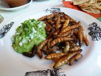 Qué comer en México: gusanos de maguey