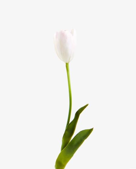 tulipan artificial