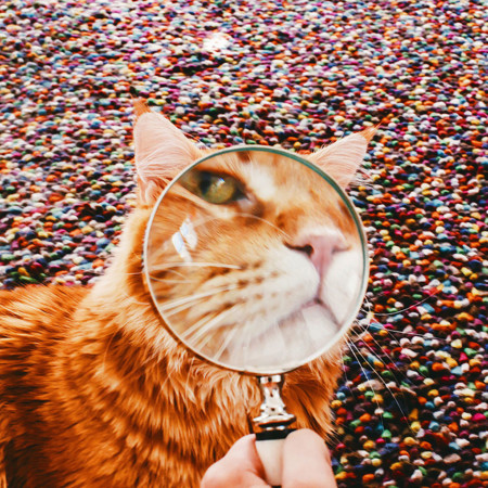 Ginger Cat Photography Kotleta Cutlet Kristina Makeeva Hobopeeba 26