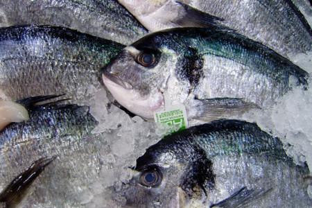 Cómo elegir pescado fresco y de calidad