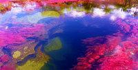 Un río multicolor en Colombia