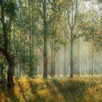 La solución más eficaz y económica para combatir el calentamiento global: plantar árboles en el equivalente al área de EEUU