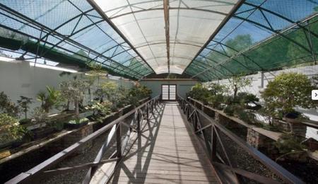 Museo Del Bonsai 2