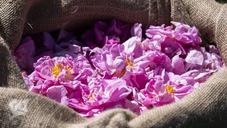 Grasse Lancome Roses 2020 6