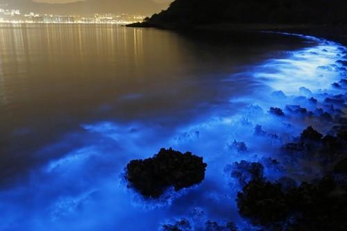Fui a la isla Holbox en Quintana Roo a ver la bioluminiscencia y ahora quiero visitar estas otras playas de México donde sucede
