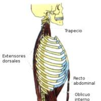 ¿Qué músculos debo ejercitar para mejorar la postura?