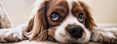 Los perros prefieren que los acaricies antes que le digas cosas cariñosas