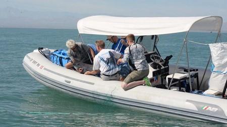 Ya localizaron a la primera vaquita marina en el Alto Golfo de Californa, las esperanzas se mantienen