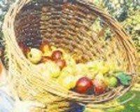 Infusiones y repostería casera con pieles de frutas biológicas.