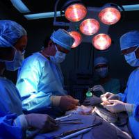 ¿Puede un pene trasplantado desde un muerto funcionar como un pene natural?