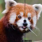 Con su incorporación a Firefox, el nuevo formato de imagen .AVIF pasa a estar disponible en todos los grandes navegadores web