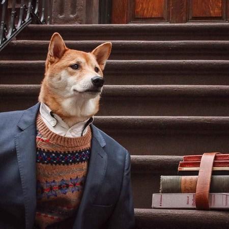 En El Nuevo Ano Chino Dedicado Al Perro Recordamos Los Mejores Looks De Nuestro Favorito Mensweardog 04