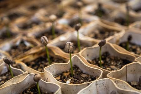La agricultura orgánica es mucho peor para el clima que la agricultura convencional