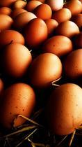 Todo lo que sé sobre el huevo y que puedo compartir