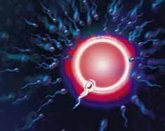 Los espermatozoides, cada vez menos y más lentos