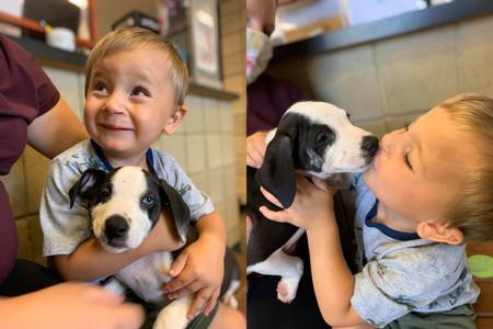 La bonita historia de un niño de dos años con labio leporino y la perrita que adoptó con el mismo defecto congénito