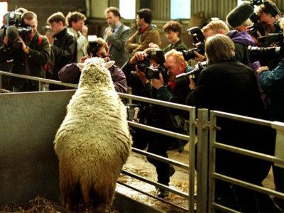 Dolly y la clonación: nacimiento, fama y ocaso de la oveja más famosa del mundo en 14 imágenes