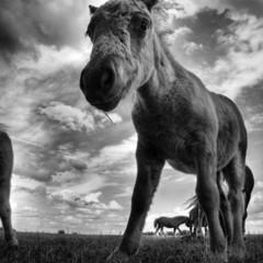 Foto 5 de 12 de la galería la-belleza-animal-en-blanco-y-negro en Xataka Foto