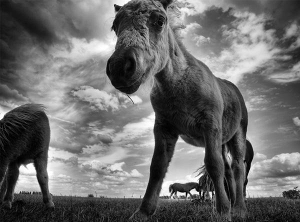 Foto de La belleza animal en Blanco y Negro (5/12)