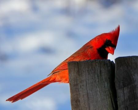 Bird 107802 640