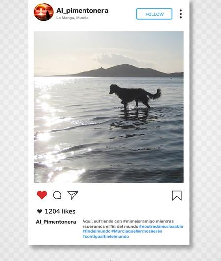 Instagram Ai Pimentonera