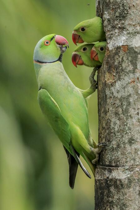 C Gagana Mendis Wickramasinghe Wildlife Photographer Of The