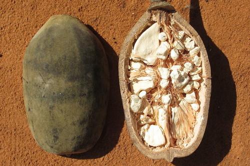 Todo lo que sabemos sobre el uso del baobab para adelgazar