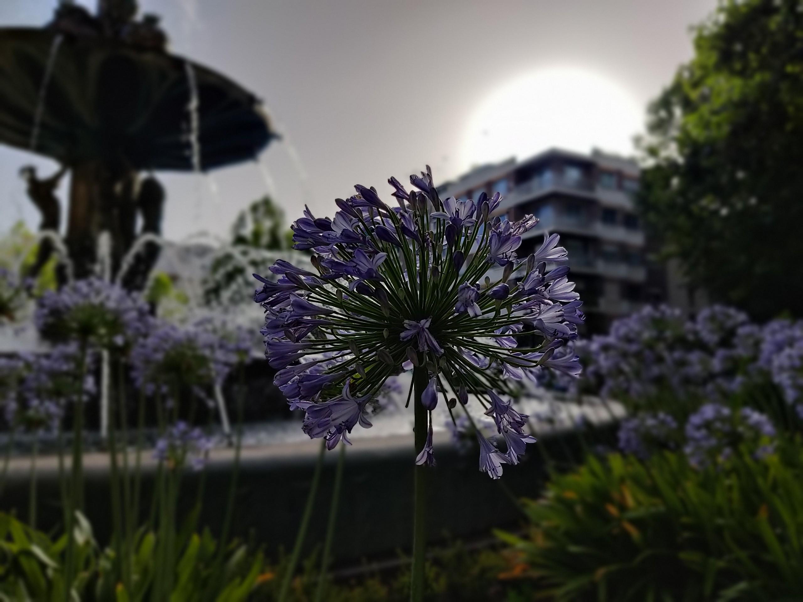 Foto de Galería de fotografías tomadas con el OnePlus Nord (9/26)