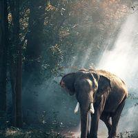 Más de un millón de especies podrían extinguirse en un corto espacio de tiempo